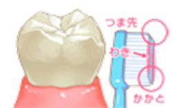 奥歯の内側の磨き方図解