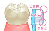 歯ブラシと歯のイラスト