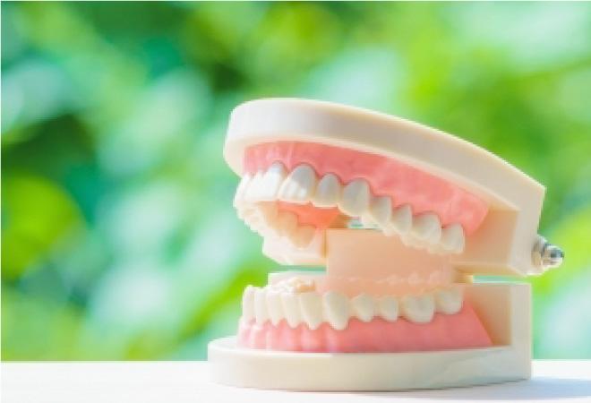 白い歯のイメージの写真